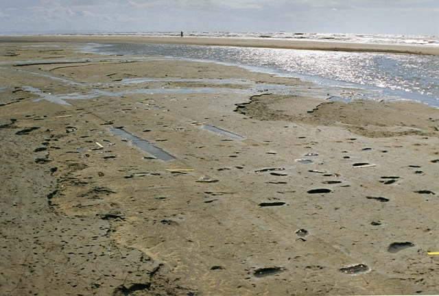 Formby footprints