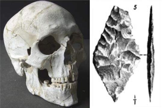 the-reconstructed-skull-of-burial-8-and-pitt-rivers-drawing-of-the-arrowhead-found-between-the-ribs