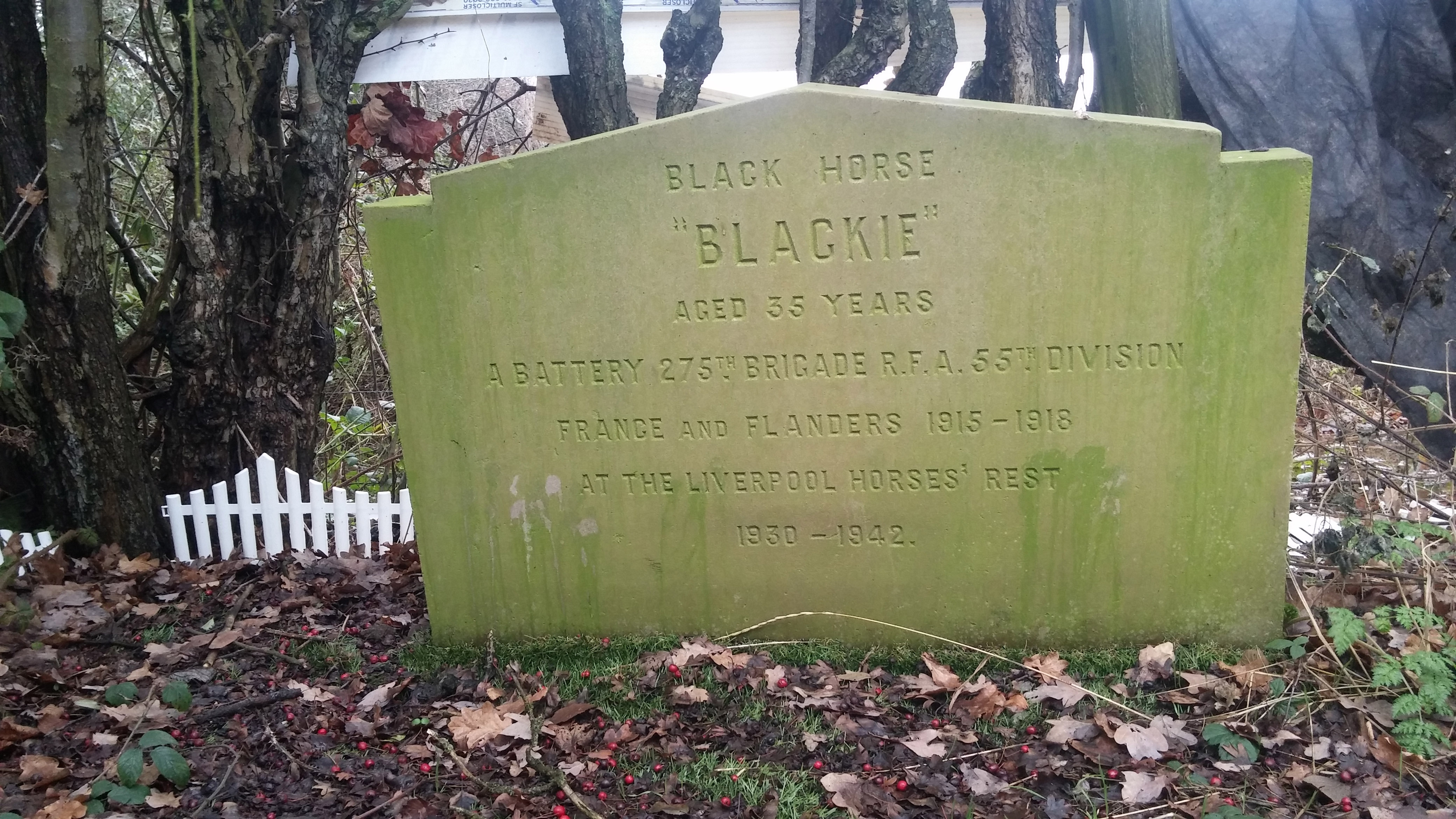 blog-blackie-the-war-horse-headstone-c-rspca.jpg